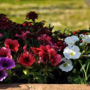 agriturismo primavera